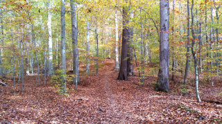Beautiful-Beech-forest-in-Beaver-Valley-900.jpg